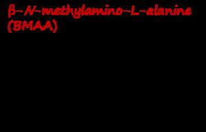 Cyanobacteria B-N-methylamino-L-alanine BMAA picture